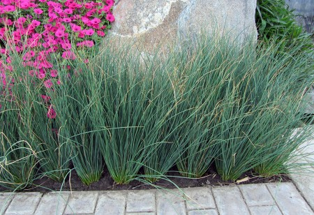 juncus-blue-arrows-2