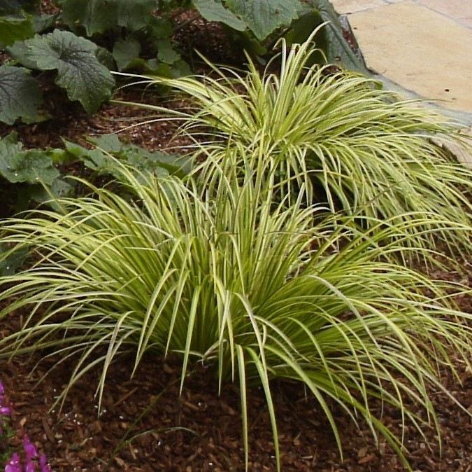 Variegated Shade Plants